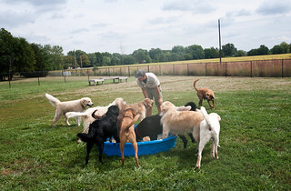 Dogs enjoying a relaxing time in the pool at Kennel Camp.