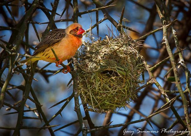 Nesting in Tanzania