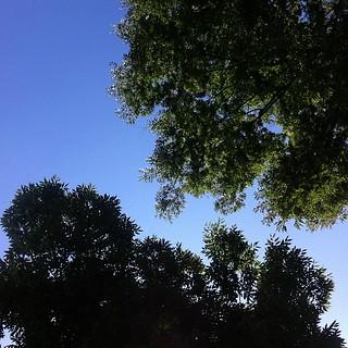 今日も快晴。 #sky #イマソラ