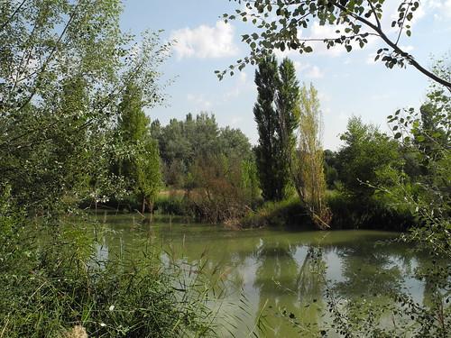 Río Duero en Quintanilla de Onésimo