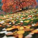 Colorfall by ~ Aaron Reed ~