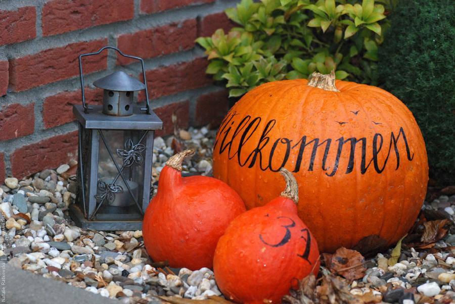 Autumn in the front garden