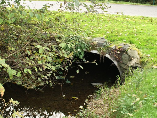 Padden Creek Culvert in Residential Area