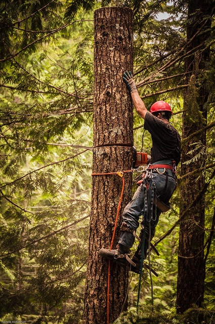 Treen Cutting