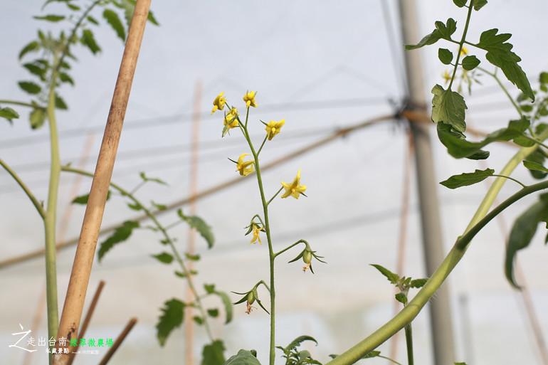 綠翠微農場 (18)