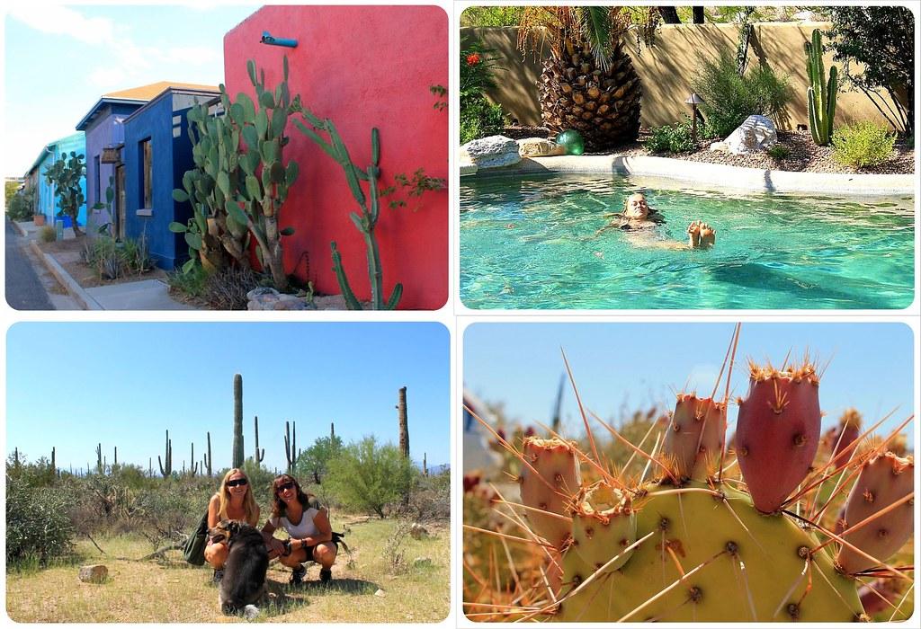 Housesit Tucson
