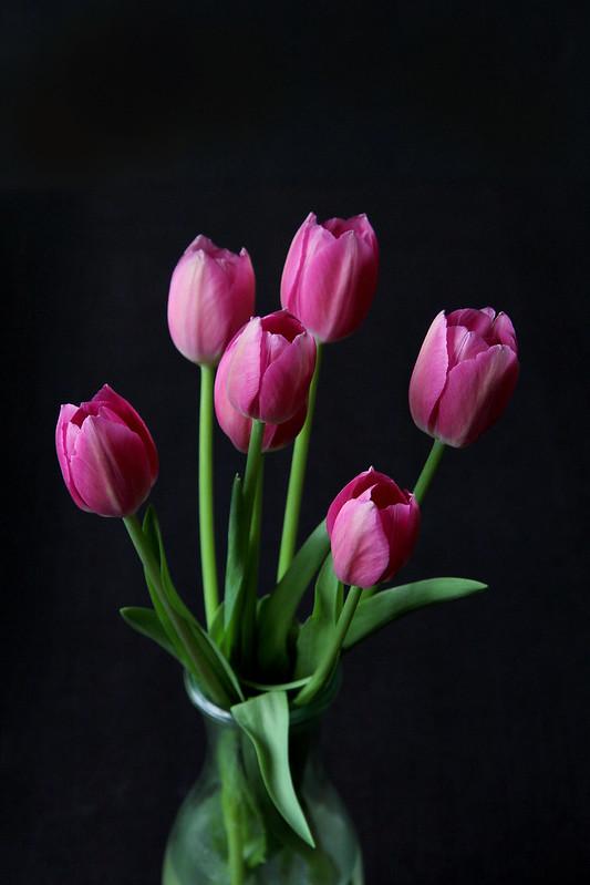 Dec-tulips