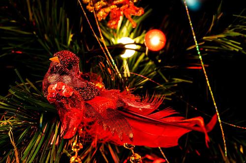 Pretty Bird Upon the Christmas Tree
