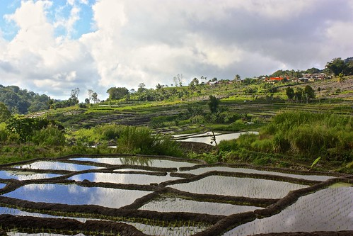 rice terraces outside of Moni