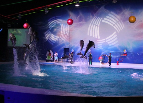 Dolphin and Seal Show at Dubai Dolphinarium