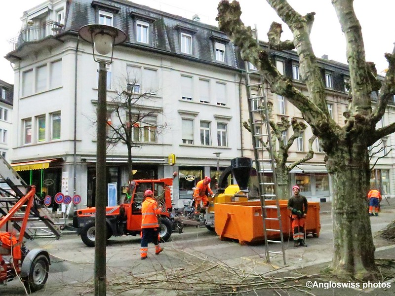 Cutting Trees on Bahnhofstrrasse, Solothurn
