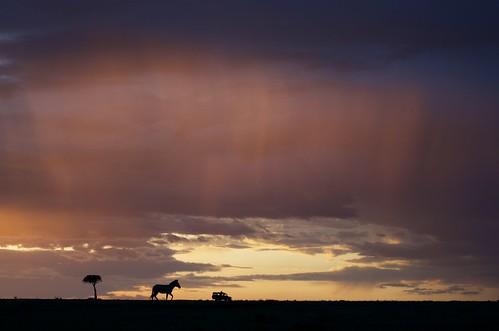 africa park sunset animals silhouette giant kenya african wildlife reserve national mara zebra savannah plains masai masaimara masiamara