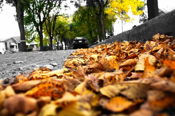Fallen Leaves (Edited)