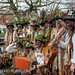 Nantwich Holly Holy Day - 25th January 2014 #1