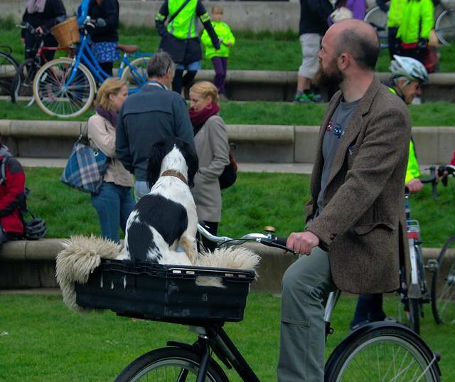Bike Dog [Explored - 26/4/13]