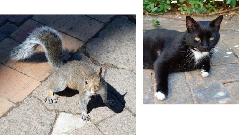 Katze Graues Eichhörnchen