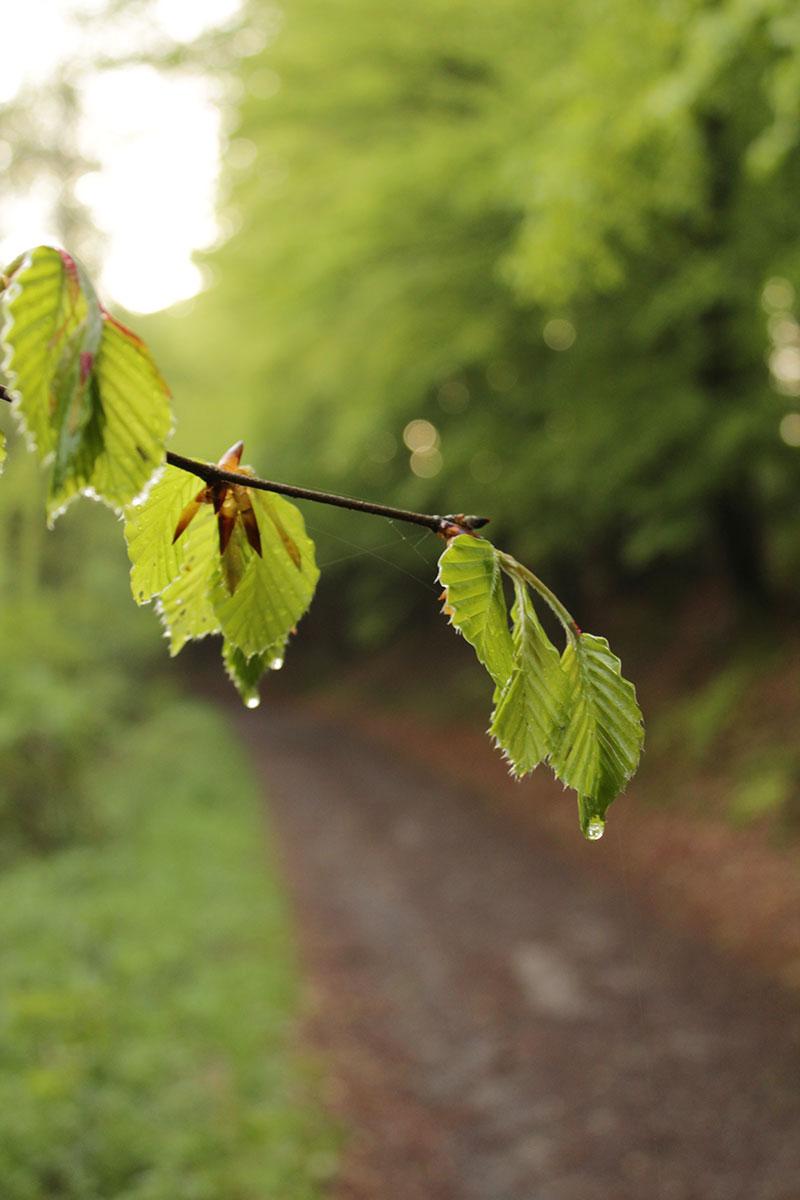 Foto Blätter mit Regentropfen