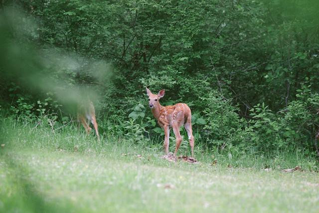 baby deer friends