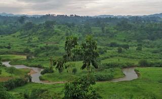 Uganda ist grün