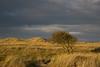 Lindisfarne 2 - 261016
