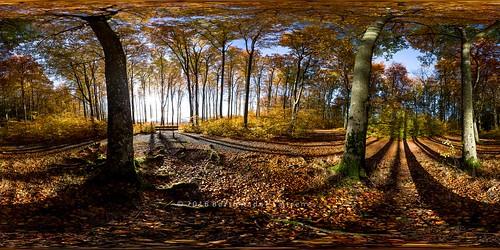 equirectangular nature norway norge natur bench benk skog scene scenics autumn tree trees trær tre larvik bøkeskogen shadow fall høst october sunlight 360degree 360 panorama