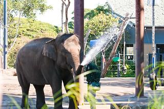 Elephant 의 이미지.