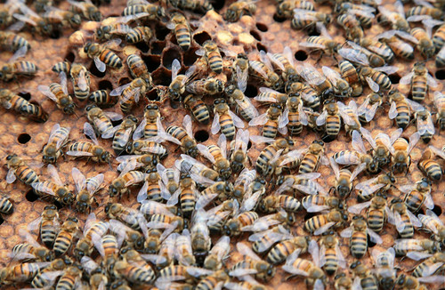 Busy Bees by peterkelly
