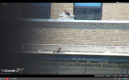 Screen Shot 2013-06-14 at 3.36.15 PM