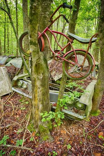 white tree cars abandoned bike america ga rust automobiles oldcarcity whitega nikond600 hdr3exp