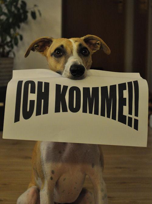 Ichkomme-001