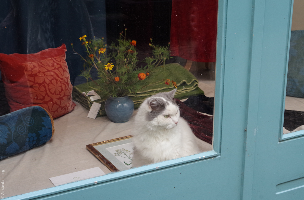 Amsterdam, Cat at the Window