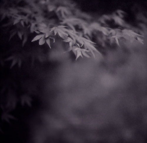 autumn, in shades of gray.