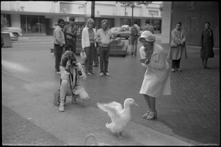 The Original Harvey the Duck and Laura-Kay Prophet. Vancouver, 1984.