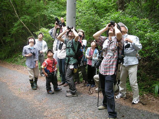 「あ,あの樹の上にいるー」という声で,参加者全員の視線は上に.