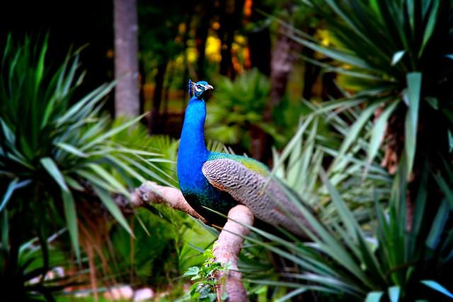 Lokrum Bird