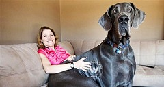 World's tallest dog is dead
