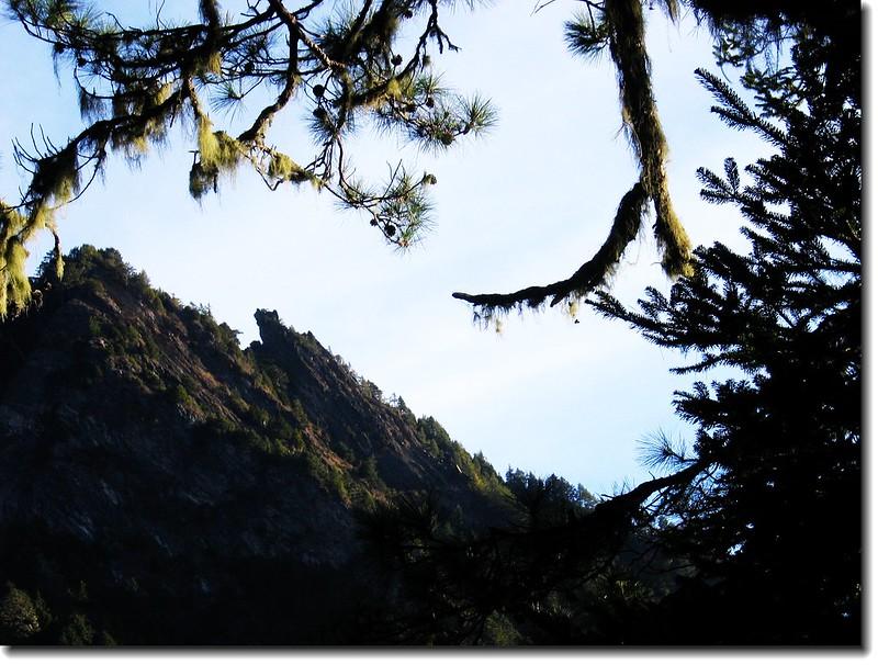 羊頭山尾稜(From 登山步道)