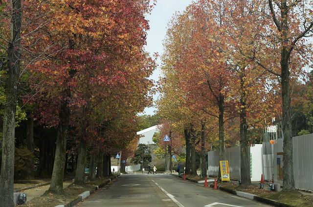 金沢市内の紅葉