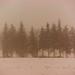 Trees Through The Blizzard by Iain McNally Photography