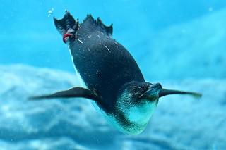 Penguin & Sydney Aquarium