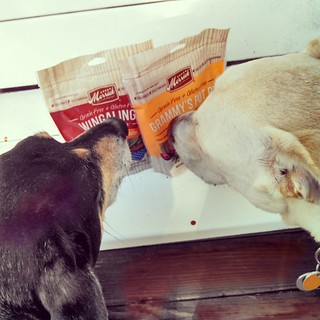 Tut & Zeus checking out the goodies from @merrickpetcare #dogstagram #BestDogEver #dogtreats #GrammysPotPie #Wingalings #happydog