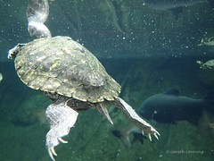 Bristol Aquarium 8th July 2014 (65)