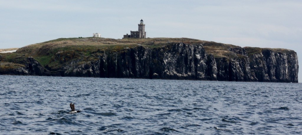 Isle of May puffin and Lighthouse