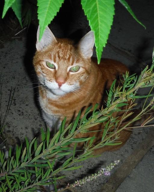 Sampo gardener