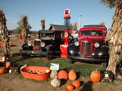 #pumpkins and #cars
