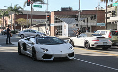 Black & White Beauties.
