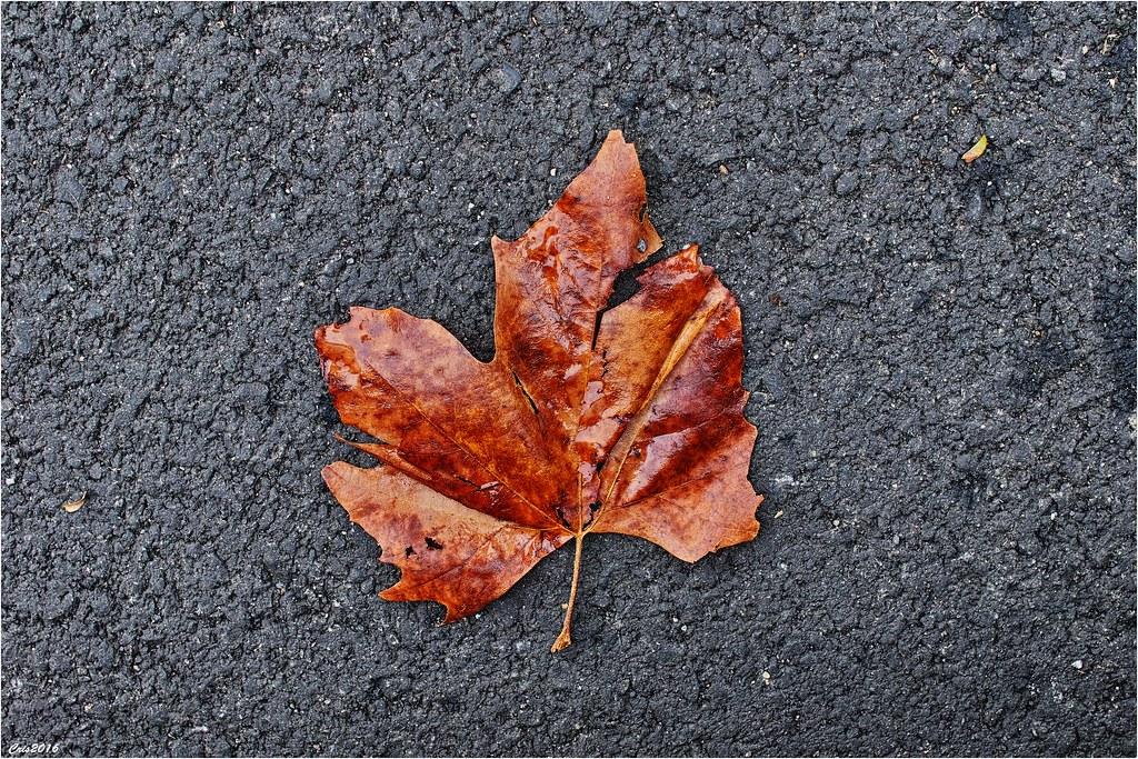 """thème du jeu de Novembre """"Couleurs d'automne"""" 30671167555_0af6e5cdf8_b"""