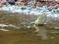 argument-for-a-bird-bath1