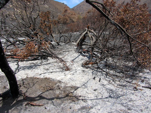 point mugu state park, after the fire