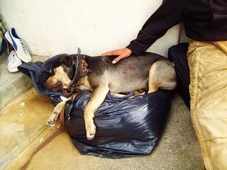 Sleeping Street Dog